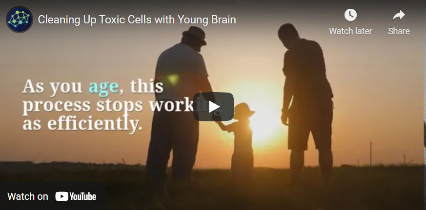 Cleaning Up Toxic Cells with Young Brain